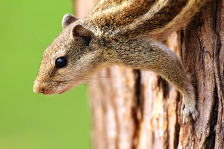 small chipmunk sitting on tree closeup Stock Photo - 17721681