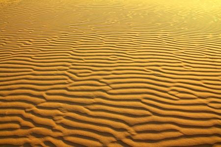 sand in desert with scarab footprints - background Stock Photo - 18494776