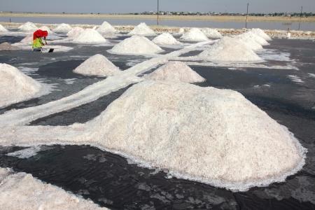 saltmine: salt mining on Sambhar lake in India