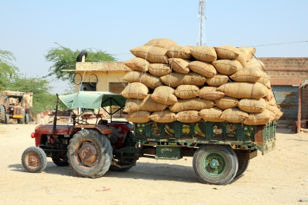 road tractor: tractor loaded with bags in rajasthan india