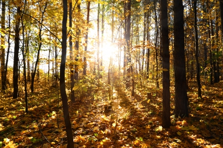 beautiful autumn forest with sun shining photo