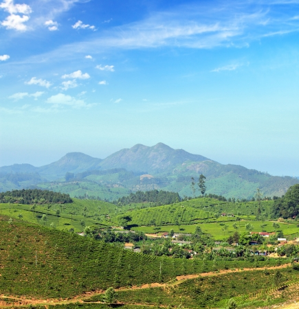 mountain tea plantation landscape in Munnar Kerala India photo