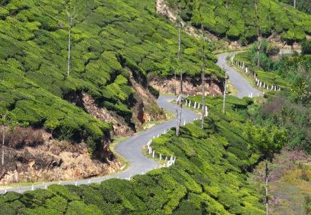 tortuous: winding road between tea plantations in Kerala India Stock Photo