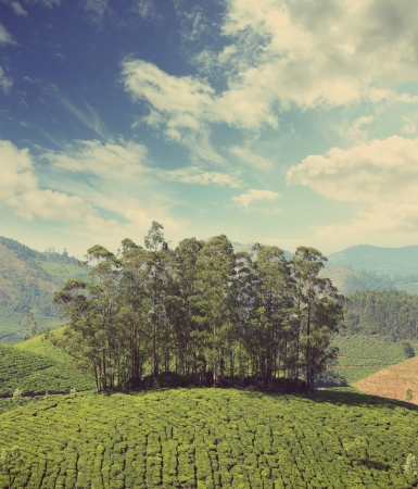 mountain tea plantation in Munnar Kerala India - vintage retro style photo