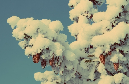 frigid: cones on christmas fir branch and blue sky - vintage retro style