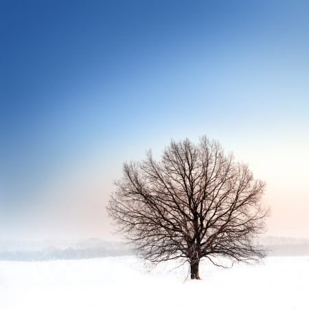 winter landscape with single bare tree photo