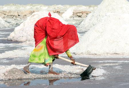 SAMBHAR, INDIA - NOVEMBER 19, 2012: Indian woman mined salt in salt lake Sambhar