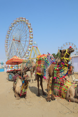ornate camels and ferris wheels at Pushkar camel fair - India photo