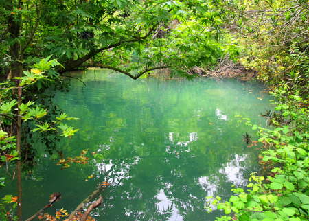 the thicket: small lake in the tropical wood thicket Stock Photo