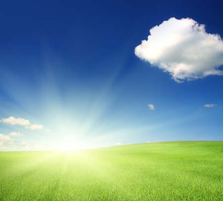 green hill with wheat under blue sky in sunshine photo