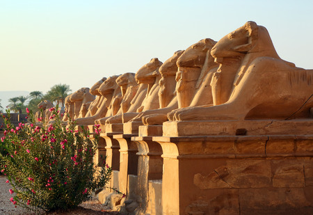 past civilization: ancient egypt statues of sphinx in Luxor karnak temple at sunset Stock Photo