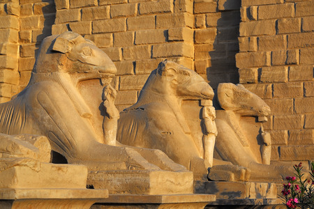 ruins is ancient: ancient egypt statues of sphinx in Luxor karnak temple at sunset Stock Photo
