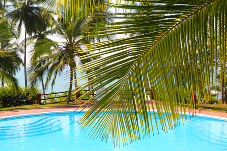 palm leaf in front of the swimming pool by the sea on a tropical resort photo