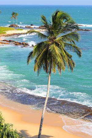 beach landscape: beautiful tropical beach landscape with palm - indian ocean