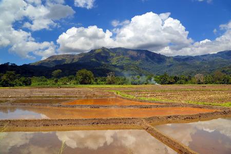 Beautiful mountain landscape with rice plantation in Sri Lanka photo