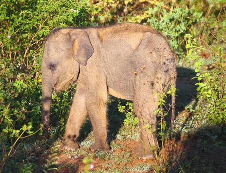 jungla: pequeña diversión bebé elefante indio en la selva