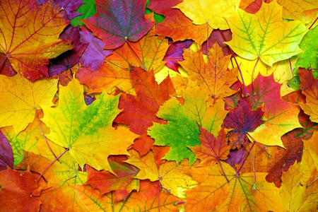 autumn in the park: background with autumn colorful leaves