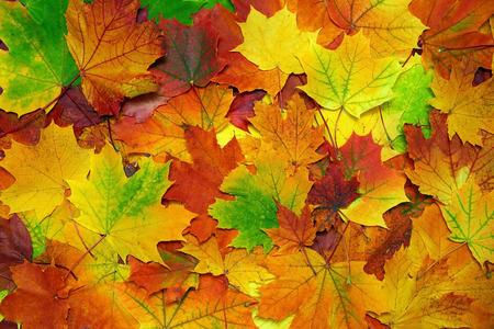 feuille arbre: fond avec les feuilles d'automne colorées