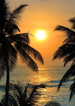 hermoso paisaje con árboles mar tropical puesta de sol y palmeras en primer plano