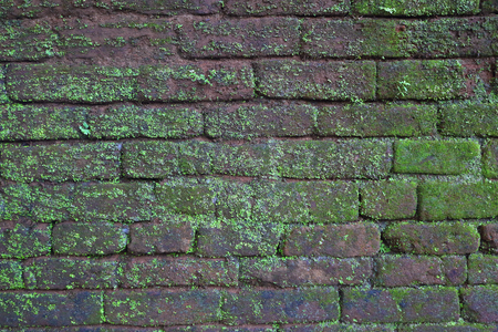 moss: Old brick wall covered with moss background Stock Photo
