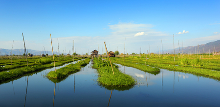 inle: Floating gardens on Inle Lake, Myanmar (Burma)