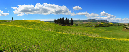 Tuscany panorama hills landscape with yellow flowers on green fields, Italy