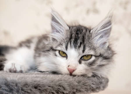 kitten lying on bed and looking at camera