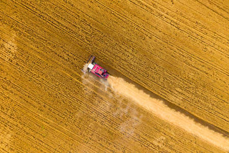 Aerial top view of combine harvester working in golden wheat field