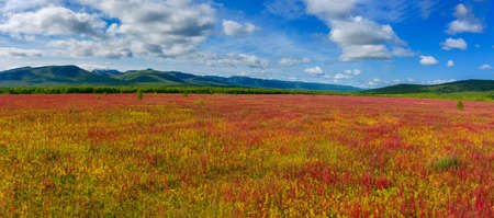 Blooming flowers willow-herb field