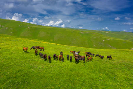 Aerial view of herd of horses grazing on slope meadow in summer. Caucasus montains Reklamní fotografie