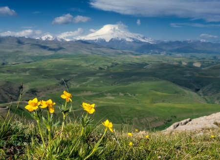 Mount Elbrus and yellow flowers