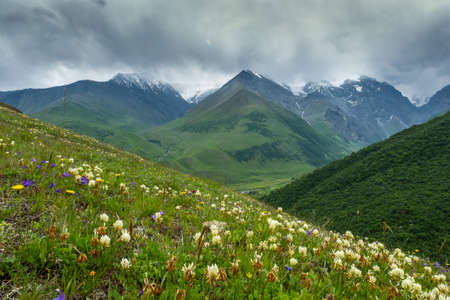 Mountain landscape with blooming meadows Reklamní fotografie