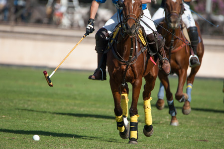 City of Barcelona Trophy International. Club de Polo Ampurdan VS Ridecrins Negrita. Barcelona, Spain. October 25, 2014. Editorial