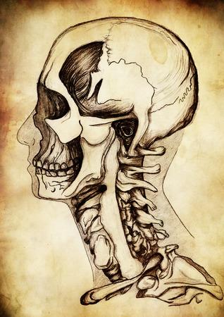 Illustration of head and skeleton