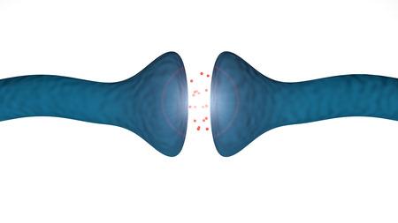 Brain synapse between brain neurons