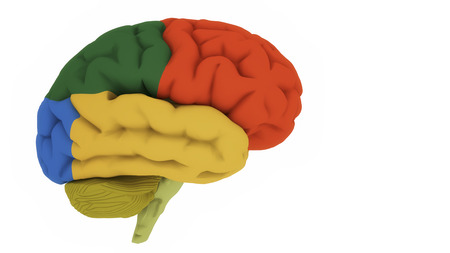 3d render Brain colord areas