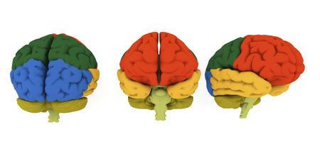Brain illustration Stock Photo