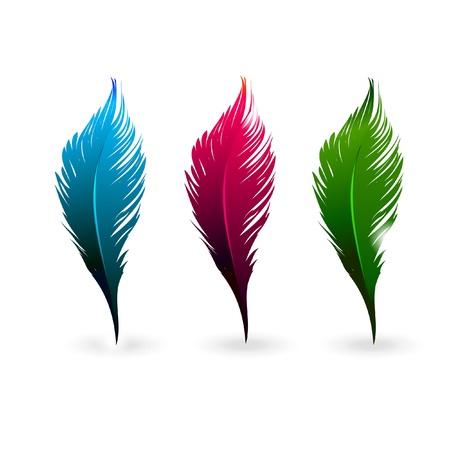 pluma: Resumen plumas de colores aislados sobre fondo blanco