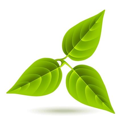 Tres hojas de color verde sobre fondo blanco