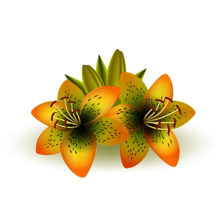 Helle Lilien auf weißem Hintergrund Vektorgrafik