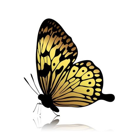 Mariposa de oro sobre fondo blanco