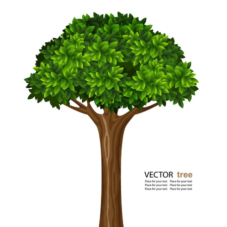 leafy: Single brightly green tree isolated on white background Illustration
