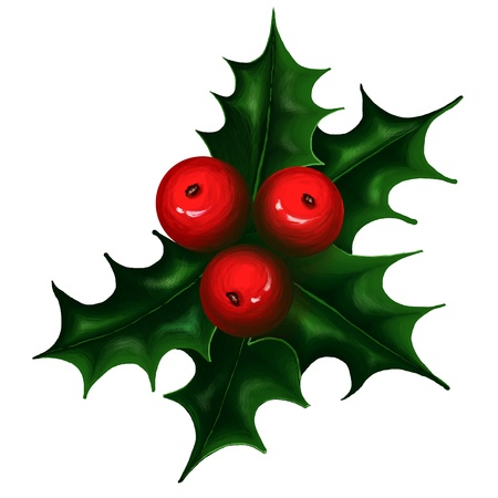 holly leaves: Holly branch on white background  Christmas symbol