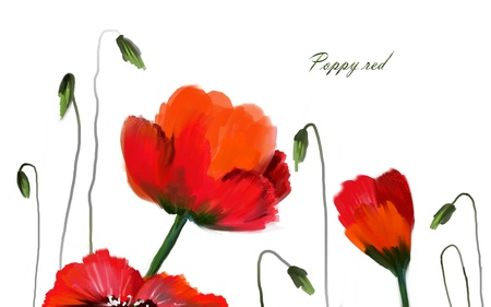 Red flowers of poppy on white background  Painting  Illustration Фото со стока