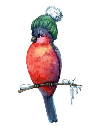 pompon: Funny bird bullfinch in cap on white background  Vector illustration Illustration