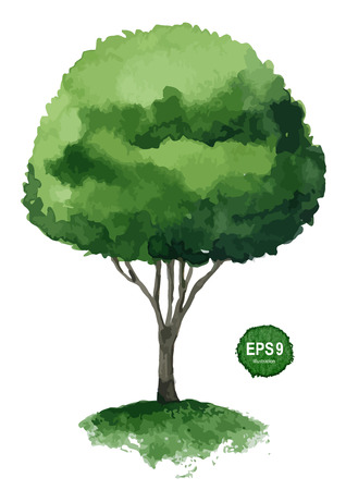 Single green tree isolated on white background  Vector illustration Stock Vector - 25234964