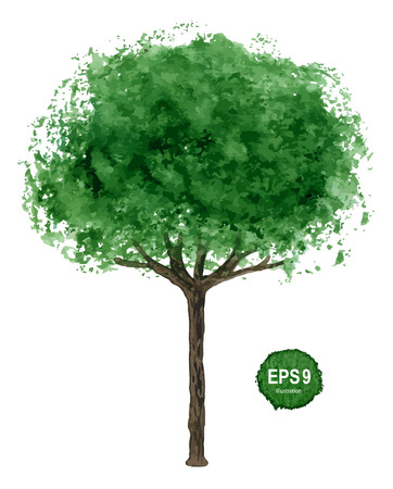 Single green tree isolated on white background  Vector illustration Stock Vector - 25234965