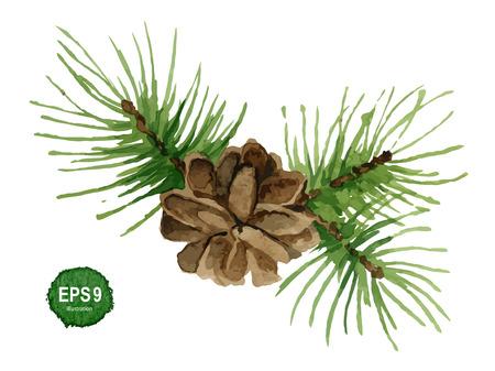 sfondo acquerello: Ramo di pino dell'acquerello con cono illustrazione vettoriale