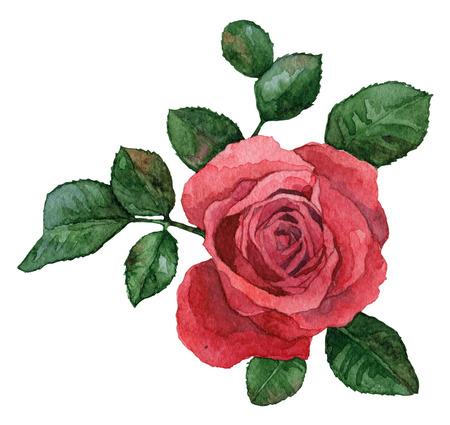 Simple fleur rose sur un fond blanc Banque d'images - 25255728