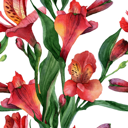 Floral pattern. Watercolor seamless background. Red alstroemeria